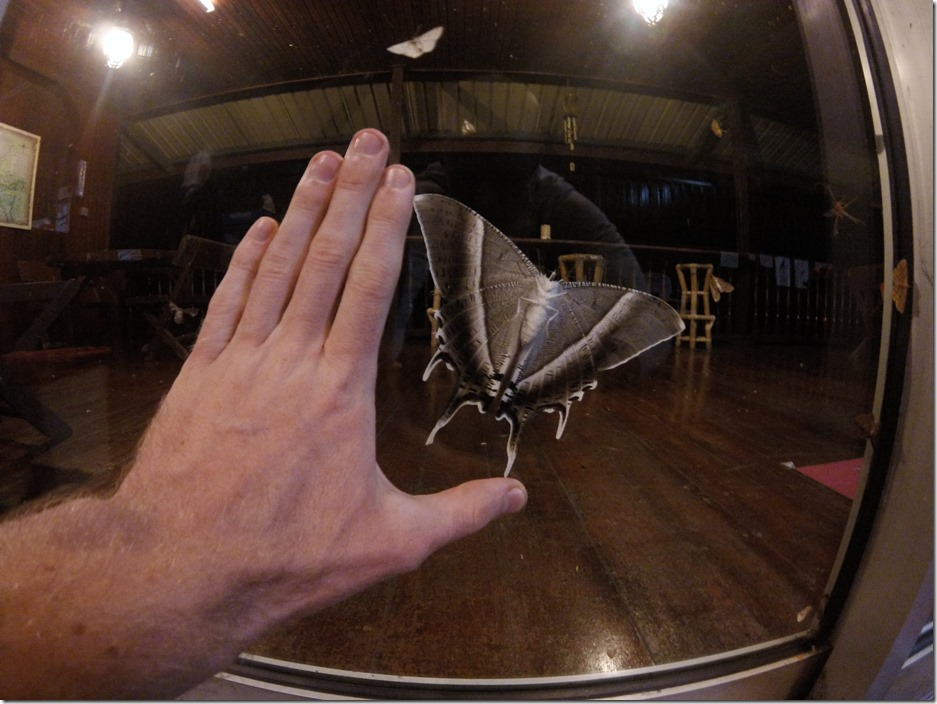 HUGE moth on the porch at Kinabalu Mountain Lodge.
