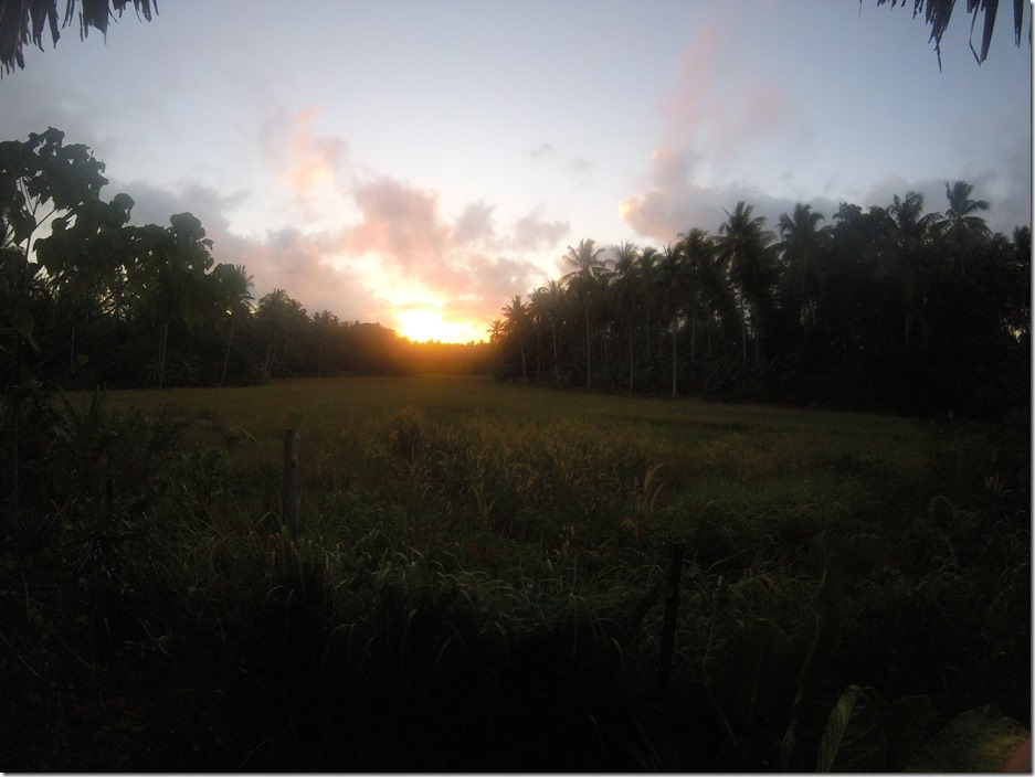 Sunrise over a rice paddy at Tampat Do Aman near the Tip of Borneo.