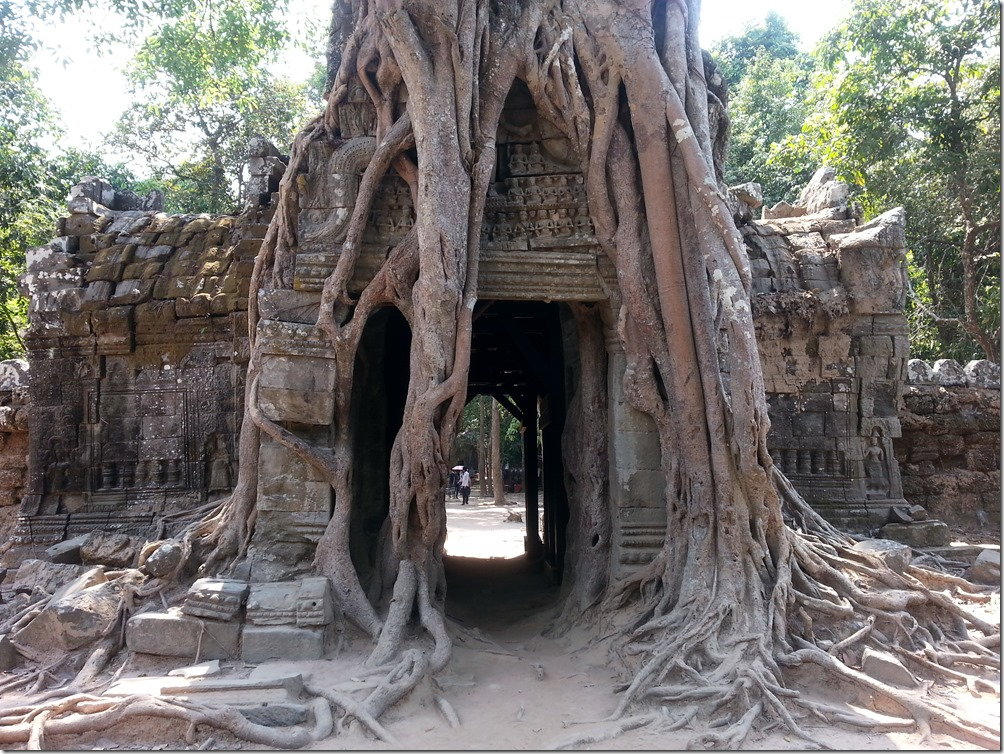 Nature vs Temple is a common theme in the Angkor Wat Complex.