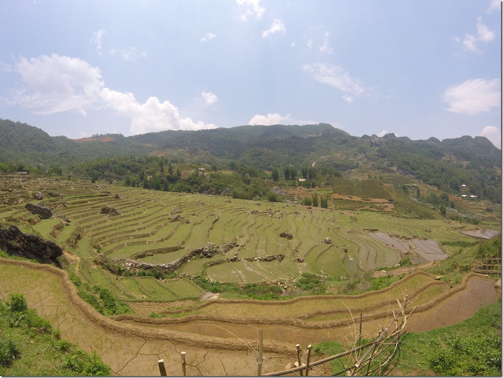Rice terraces on our trek in Sapa.