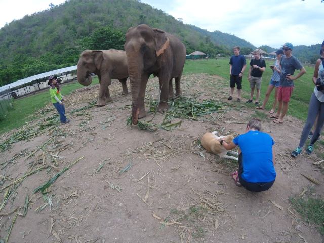 One of the benefits of going to an elephant sanctuary is the opportunity to interact with elephants...or petting puppies if you are Danielle.