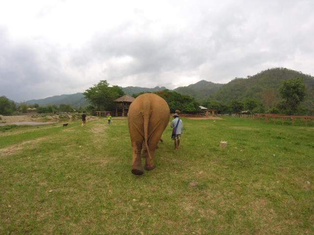 Elephant Nature Park. Chiang Mai, Thailand.